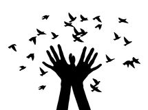 Black and white vector illustration depicting hands, letting out a flock of birds. Silhouette of the hands that released birds. Vector illustration Stock Photography