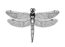 Black and white vector illustration of a dragonfly vector illustration