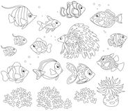 Set of fishes. Black and white vector illustrations of different fishes drawn in cartoon style Royalty Free Stock Photography