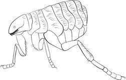 Black and white vector image of flea Royalty Free Stock Photos