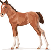 Black and white vector outlines of galloping foal Royalty Free Stock Image