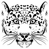 Black and white vector sketch leopard face. Black and white vector sketch of a leopard face. Hand drawn vector illustration in doodle style Stock Photography