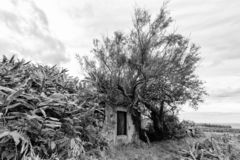 Black and White Azores royalty free stock images