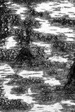 Black and white view of birch bark Royalty Free Stock Photo