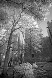 Black and white view of the old castle Royalty Free Stock Photo