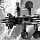 Black and white violin scroll against paisley- square royalty free stock image