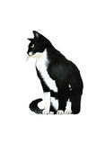 Black and white water color cat from the side. Black watercolor cat from the side on white background isolated illustration Stock Photos