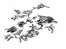 Black and white watercolor illustration of bird on twig.  vector illustration
