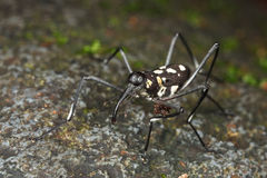 Black and white weevil. On rock stock photos