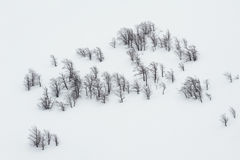 Black on white or weightlessness. Black trunks of beech trees on the white untouched snow Royalty Free Stock Photography