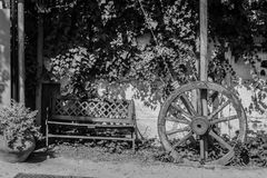 Black and white of a wheel and a back. Frame of a wheel and a back with some plants in a park. All in black and white stock photo