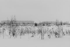 Black and white Winter landscape with snow covered trees. Winter landscape in forest with trees covered with snow Royalty Free Stock Photos