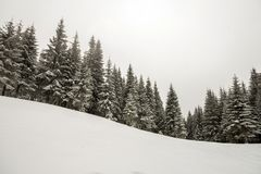 Black and white winter mountain New Year Christmas landscape. Tall pine trees covered with frost in deep clear snow in winter. Forest royalty free stock photography