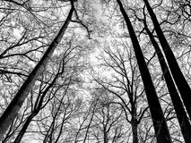 Black and white winter trees stock image