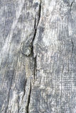 Black and white wooden surface with cracks Royalty Free Stock Images