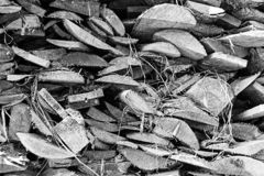 Black and white woodpile is close. Up stock photography