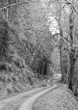 Sinuous double track roadway winds into background. Black and white woods road along high gradient slope in the pacific northwest.  Fern growth and conifers hem Stock Photos