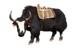 Black and white yak Stock Photo