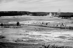 Black and white Yellowstone national park Royalty Free Stock Photos