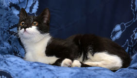 Black and white young cat Royalty Free Stock Photography