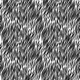Black and white zebra background Royalty Free Stock Image