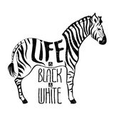 Black and white zebra concept drawing royalty free illustration