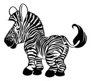 Black and white zebra Royalty Free Stock Image
