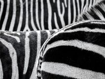 Black and White Zebra Patternt Royalty Free Stock Photography
