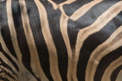 Black and white zebra skin closeup and background Stock Photos