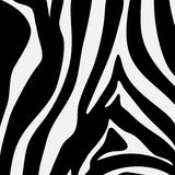Black and white zebra stripes pattern Royalty Free Stock Photo