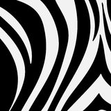 Black and white zebra texture Royalty Free Stock Photos