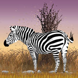 Black and white zebra vector in the bush with sunset in the background Stock Images