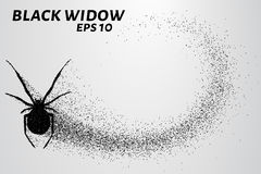 Black widow from the particles. The silhouette of the black widow of small circles. Vector illustration Stock Image