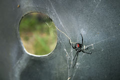 Black Widow Spider. A black widow spider in it's web on a metal surface Stock Images