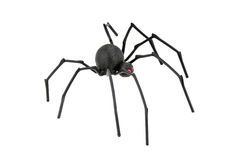 Black Widow Spider. Spider, Redback or Black Widow, Latrodectus hasselti, isolated on white Royalty Free Stock Photos