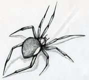 Black widow spider drawing vector illustration