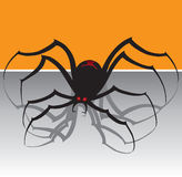 Black Widow Spider Stock Photo