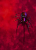 Black widow spider on red wall Stock Photography