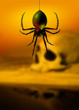 Black widow spider and skull. Human skull in background with a black widow spider dangeling down in the foreground Stock Images