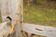 Black Widow Spider Web Stock Photography