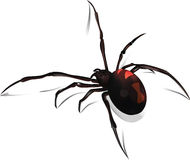 Black Widow Vector Royalty Free Stock Image