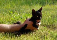 Black wild cat Stock Image