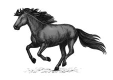 Black wild horse running on races vector sketch. Horse racing vector sketch. Black wild mustang running on races. Farm stallion animal for equestrian horserace Stock Images
