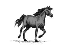Black wild horse running on racing sport. Horse racing on sport races. Wild black race horse mustang running fast gallop. Horserace vector symbol sketch for Royalty Free Stock Images