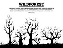 Black wild old forest landscape background. Banner and poster. Vector illustration Stock Photos