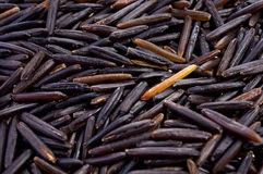 Black wild rice Stock Photography