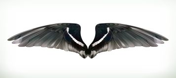 Black Wings illustration Stock Image