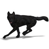 Black Wolf Royalty Free Stock Photo