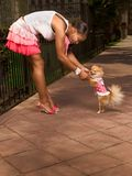 Black woman with Pomeranian Spitz (focus on dog). Attractive African-American young woman dancing with smiling small Pomeranian Spitz dog, that walks on rear Stock Photos