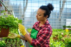 Black woman working in a botanical garden. African american working in a botanical garden stock photography